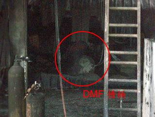 DMF遭波及狀況