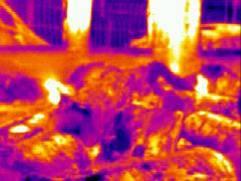 紅外線熱影像儀偵測